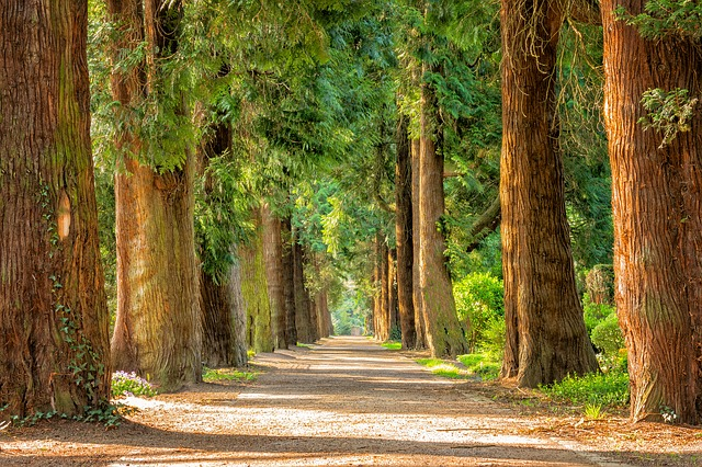 Walking through the forest. Christian Trauma Therapy and PTSD treatmen in Clackamas, Hillsboro and in online therapy in Oregon.
